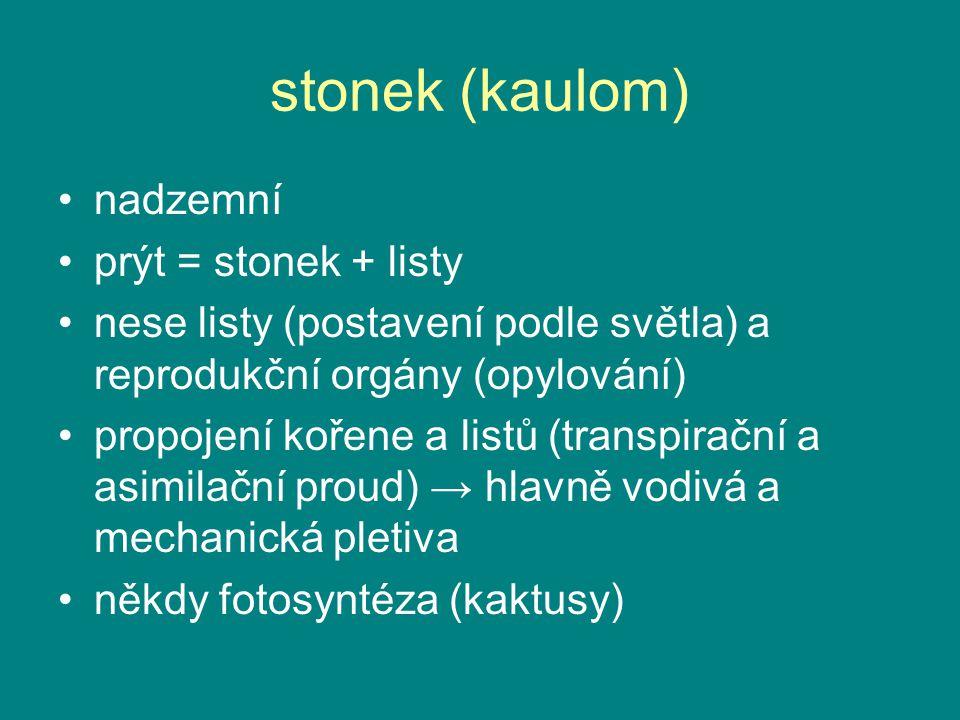 stonek (kaulom) nadzemní prýt = stonek + listy nese listy (postavení podle světla) a reprodukční orgány (opylování) propojení kořene a listů (transpir