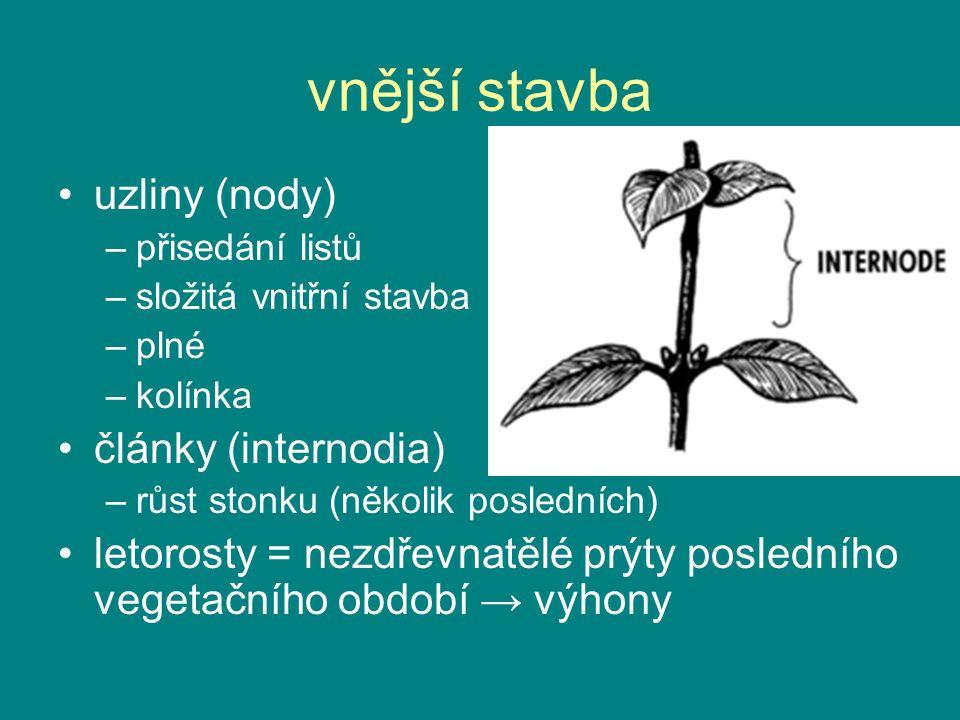 vnější stavba uzliny (nody) –přisedání listů –složitá vnitřní stavba –plné –kolínka články (internodia) –růst stonku (několik posledních) letorosty =