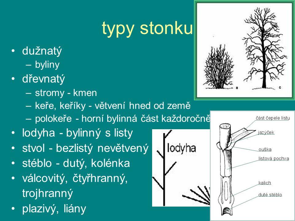 typy stonku dužnatý –byliny dřevnatý –stromy - kmen –keře, keříky - větvení hned od země –polokeře - horní bylinná část každoročně odumírá lodyha - by