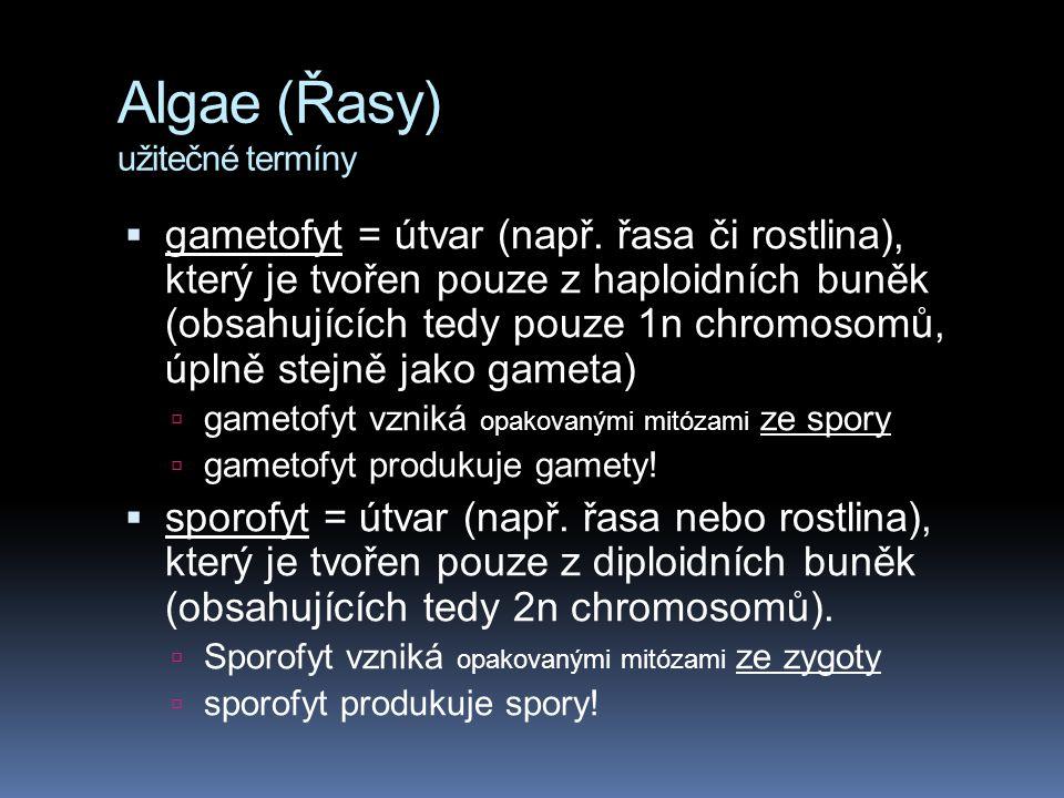 Algae (Řasy) užitečné termíny  gametofyt = útvar (např. řasa či rostlina), který je tvořen pouze z haploidních buněk (obsahujících tedy pouze 1n chro
