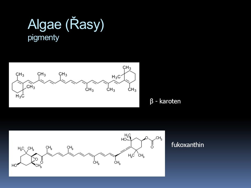Algae (Řasy) pigmenty fukoxanthin β - karoten