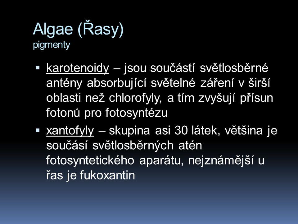 Algae (Řasy) pigmenty  karotenoidy – jsou součástí světlosběrné antény absorbující světelné záření v širší oblasti než chlorofyly, a tím zvyšují přís