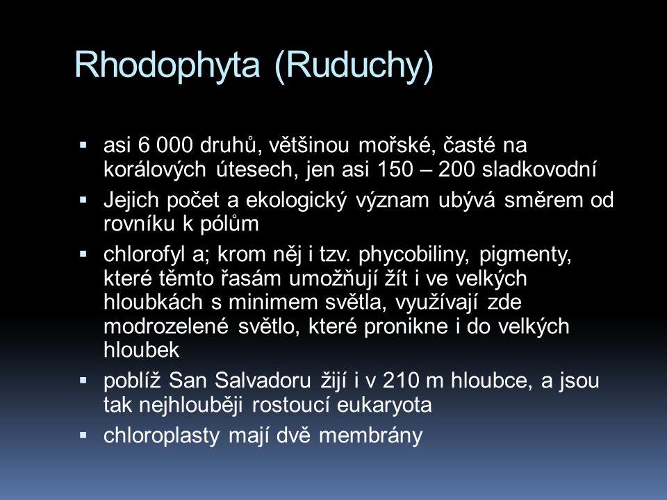 Rhodophyta (Ruduchy)  asi 6 000 druhů, většinou mořské, časté na korálových útesech, jen asi 150 – 200 sladkovodní  Jejich počet a ekologický význam