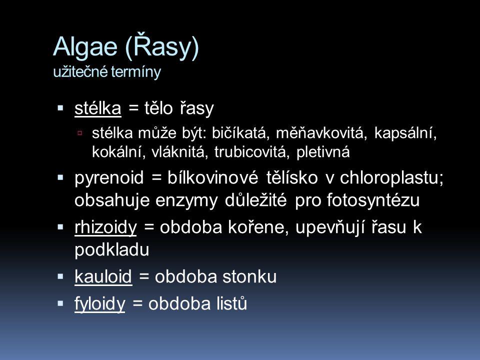 Algae (Řasy) užitečné termíny  stélka = tělo řasy  stélka může být: bičíkatá, měňavkovitá, kapsální, kokální, vláknitá, trubicovitá, pletivná  pyre