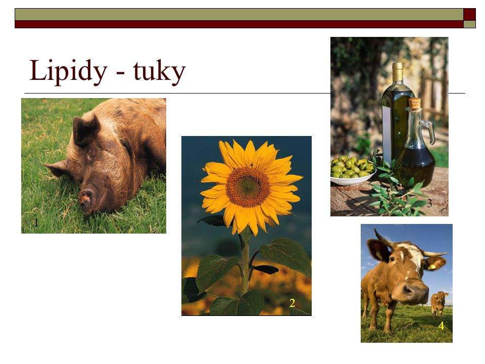 Lipidy - tuky 1 2 3 4