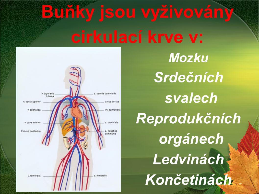 Mozku Srdečních svalech Reprodukčních orgánech Ledvinách Končetinách Buňky jsou vyživovány cirkulací krve v: