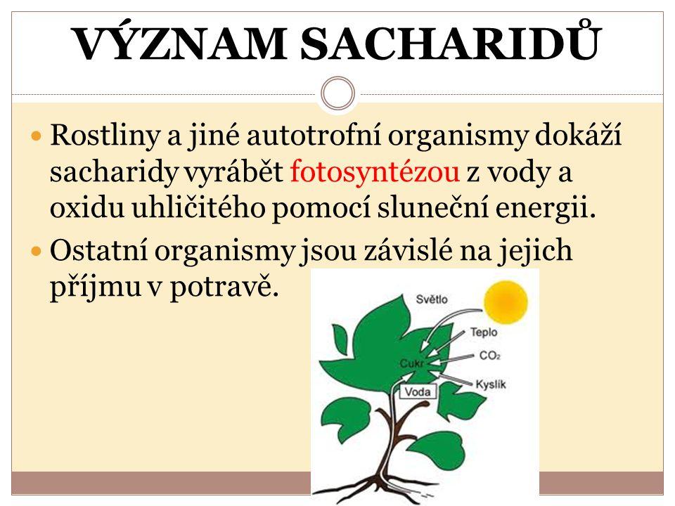 VÝZNAM SACHARIDŮ Rostliny a jiné autotrofní organismy dokáží sacharidy vyrábět fotosyntézou z vody a oxidu uhličitého pomocí sluneční energii. Ostatní