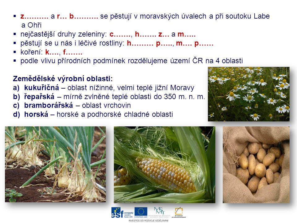  z………. a r… b………. se pěstují v moravských úvalech a při soutoku Labe a Ohři  nejčastější druhy zeleniny: c……., h……. z… a m…..  pěstují se u nás i l