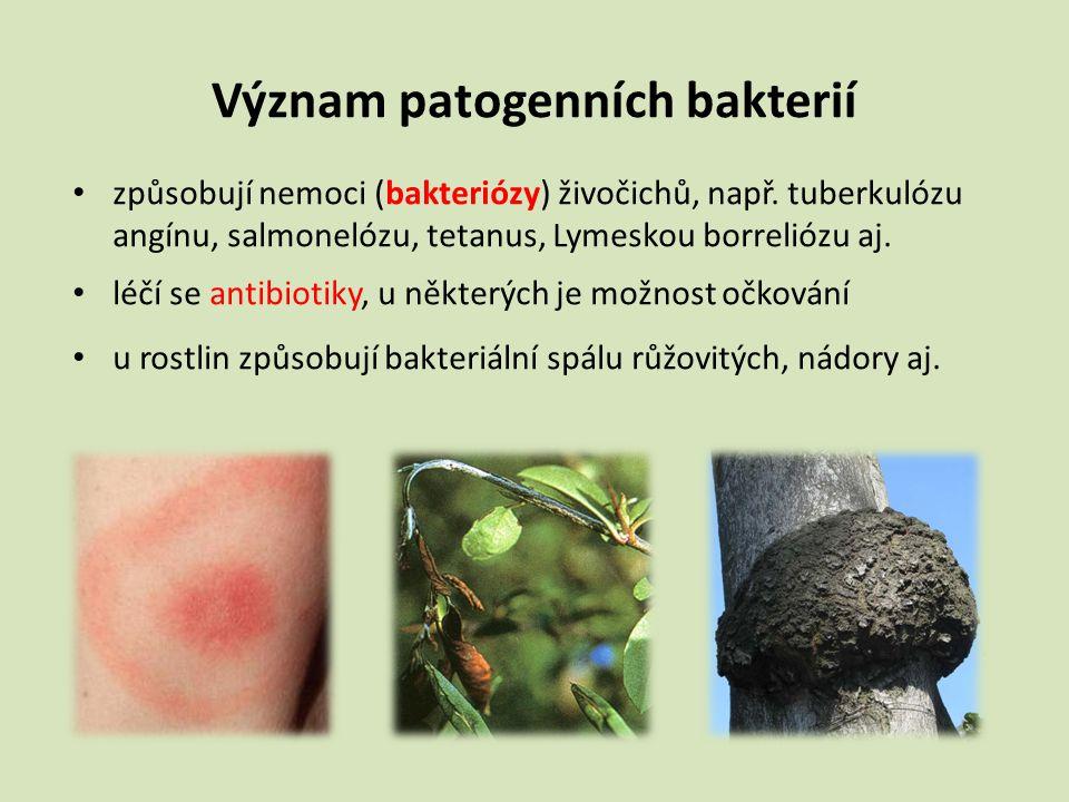 Význam patogenních bakterií způsobují nemoci (bakteriózy) živočichů, např. tuberkulózu angínu, salmonelózu, tetanus, Lymeskou borreliózu aj. léčí se a
