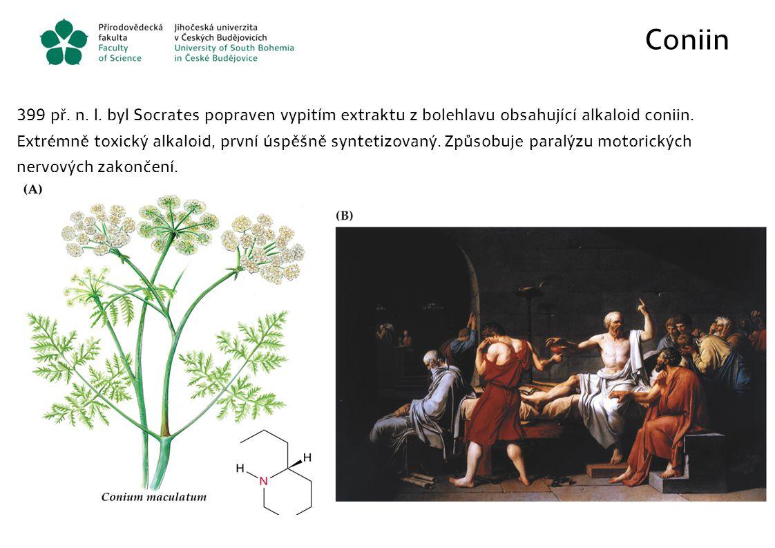 Coniin 399 př. n. l. byl Socrates popraven vypitím extraktu z bolehlavu obsahující alkaloid coniin. Extrémně toxický alkaloid, první úspěšně syntetizo
