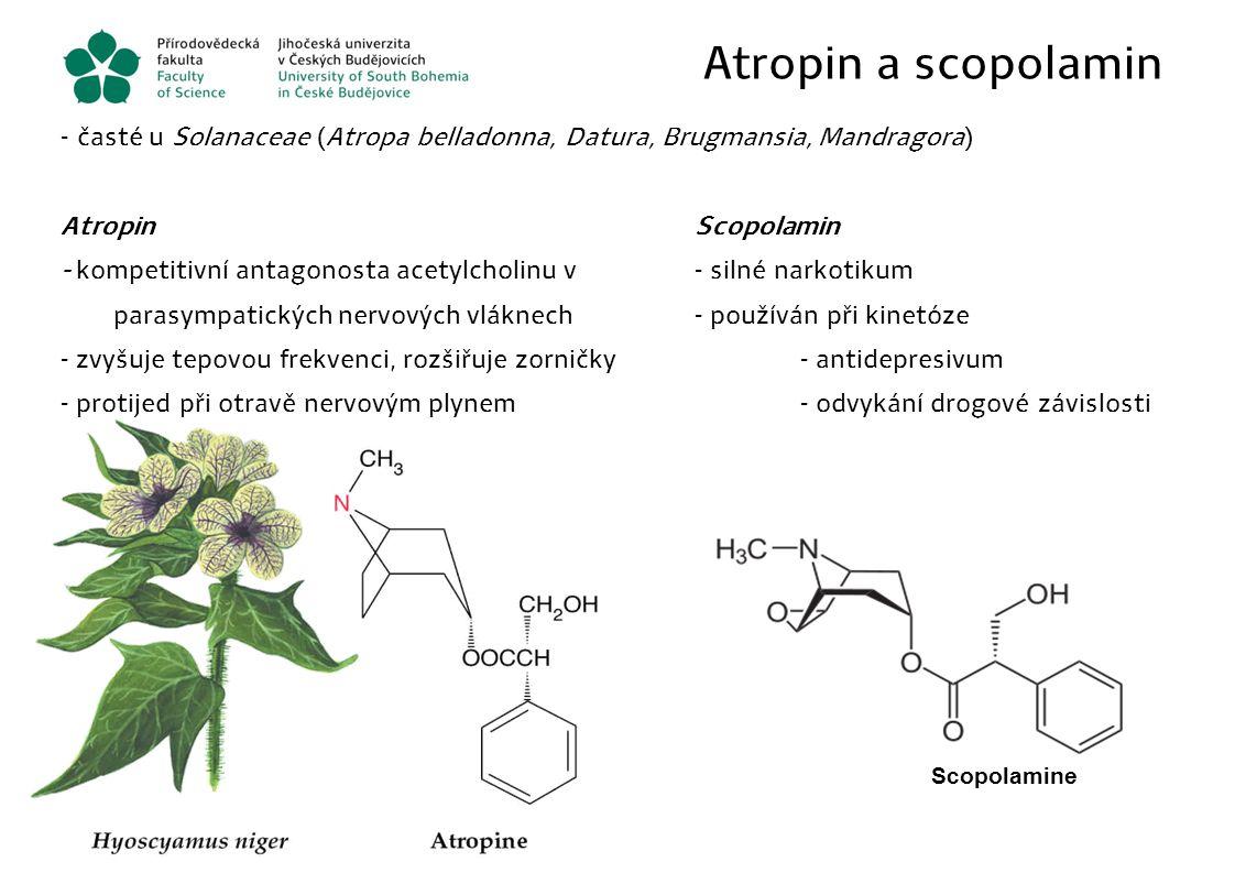 Atropin a scopolamin - časté u Solanaceae (Atropa belladonna, Datura, Brugmansia, Mandragora) AtropinScopolamin - kompetitivní antagonosta acetylcholi