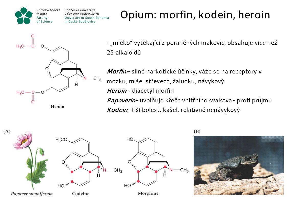 """Opium: morfin, kodein, heroin - """"mléko"""" vytékající z poraněných makovic, obsahuje více než 25 alkaloidů Morfin – silné narkotické účinky, váže se na r"""