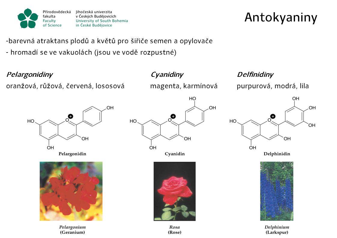 Antokyaniny - barevná atraktans plodů a květů pro šiřiče semen a opylovače - hromadí se ve vakuolách (jsou ve vodě rozpustné) PelargonidinyCyanidinyDe
