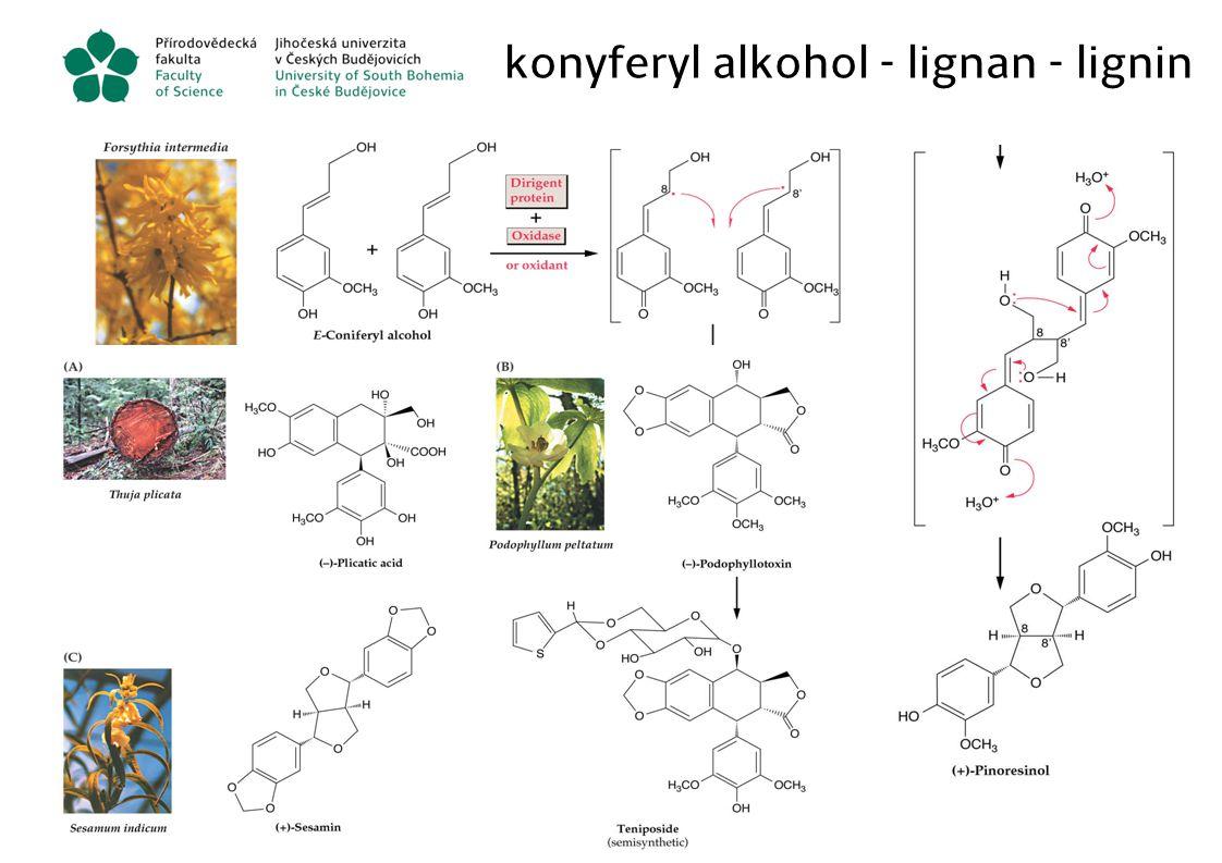 konyferyl alkohol - lignan - lignin