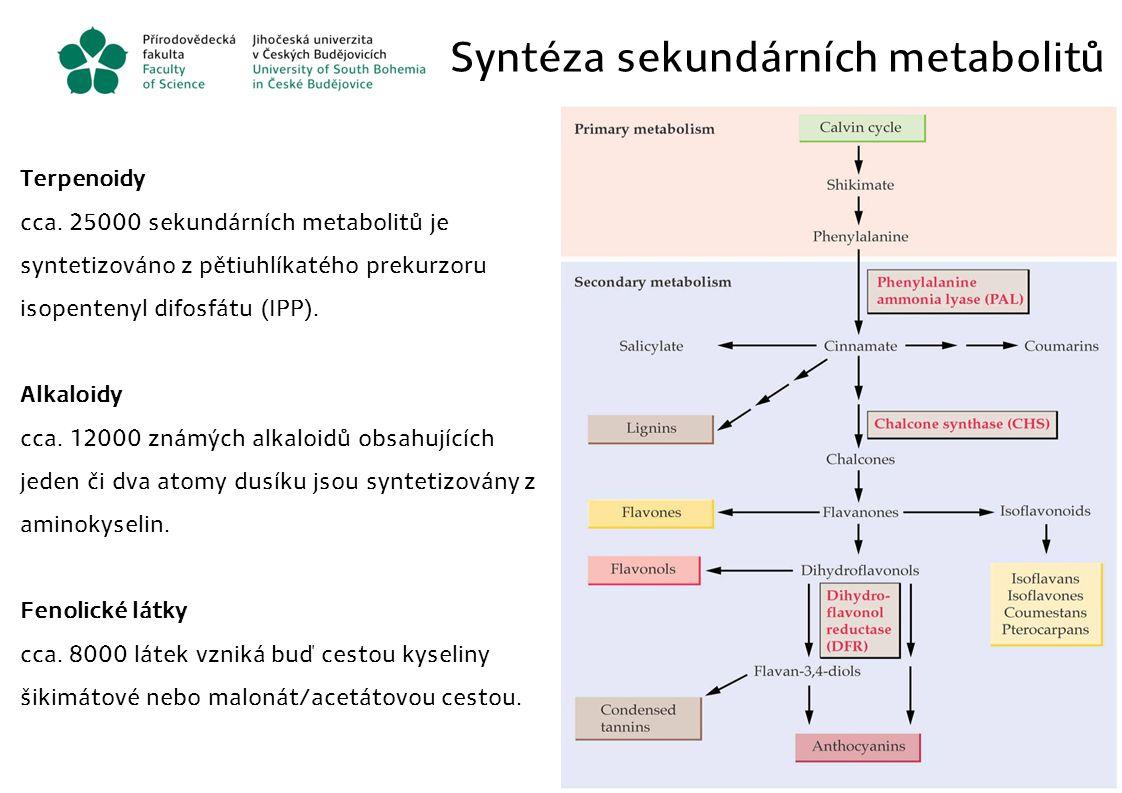 Syntéza sekundárních metabolitů Terpenoidy cca. 25000 sekundárních metabolitů je syntetizováno z pětiuhlíkatého prekurzoru isopentenyl difosfátu (IPP)