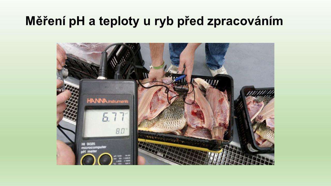 Měření pH a teploty u ryb před zpracováním