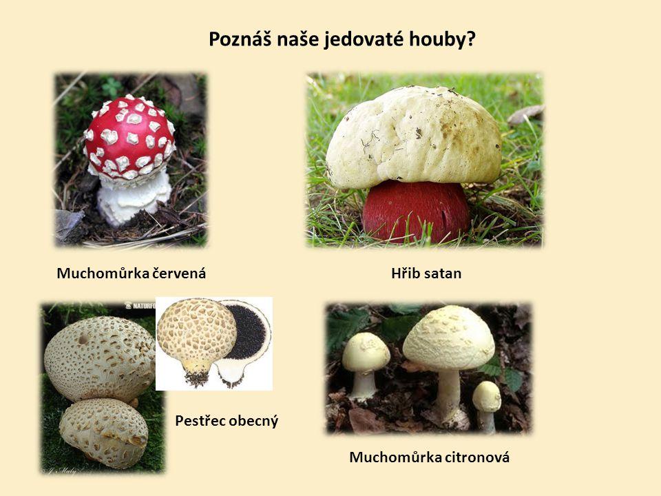Poznáš naše jedovaté houby? Hřib satanMuchomůrka červená Muchomůrka citronová Pestřec obecný