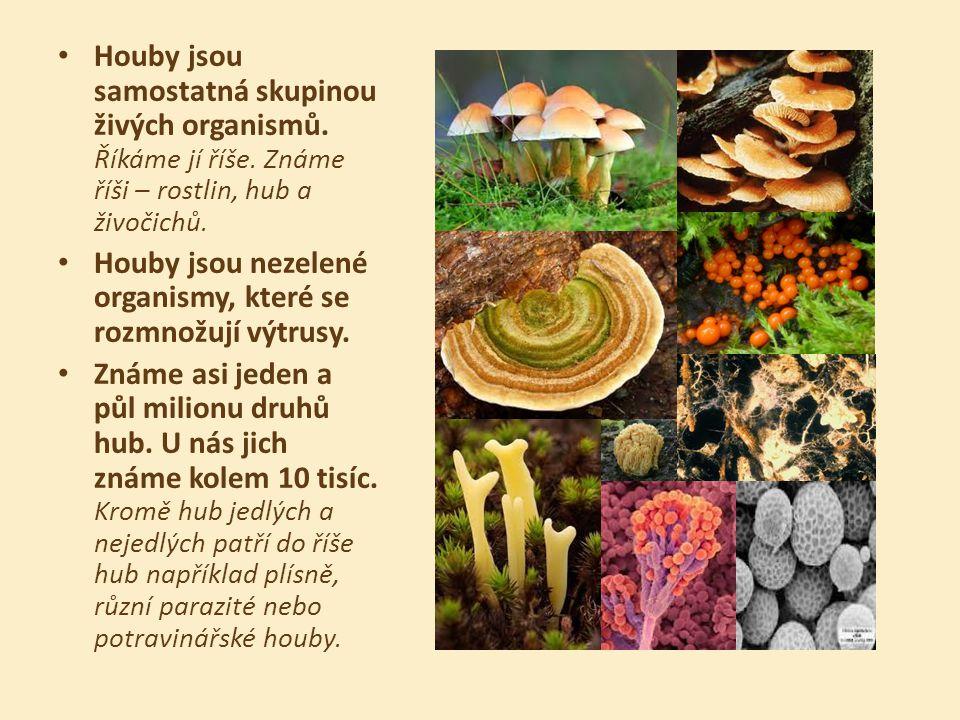 Houby jsou samostatná skupinou živých organismů. Říkáme jí říše. Známe říši – rostlin, hub a živočichů. Houby jsou nezelené organismy, které se rozmno