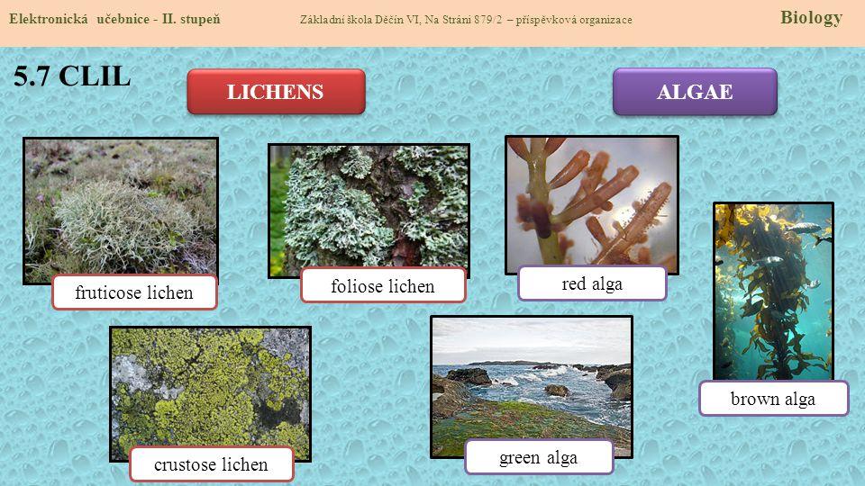 5.7 CLIL Elektronická učebnice - II. stupeň Základní škola Děčín VI, Na Stráni 879/2 – příspěvková organizace Biology LICHENS ALGAE fruticose lichen f