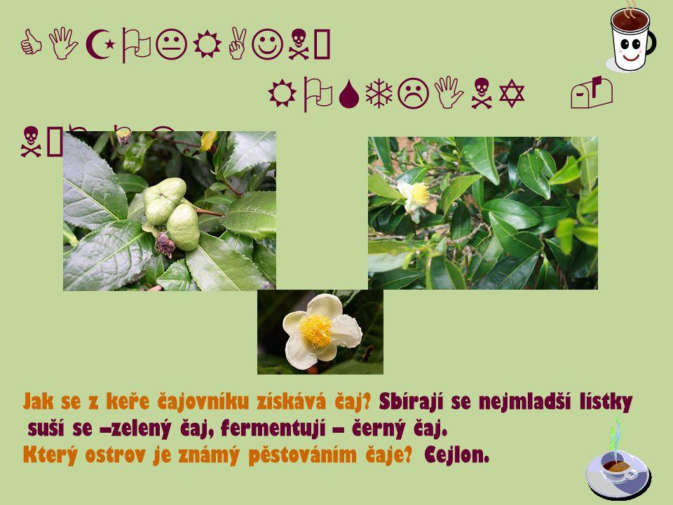 CIZOKRAJNÉ ROSTLINY - NÁPOJE U některých rostlin vyrůstají květy přímo na kmeni.