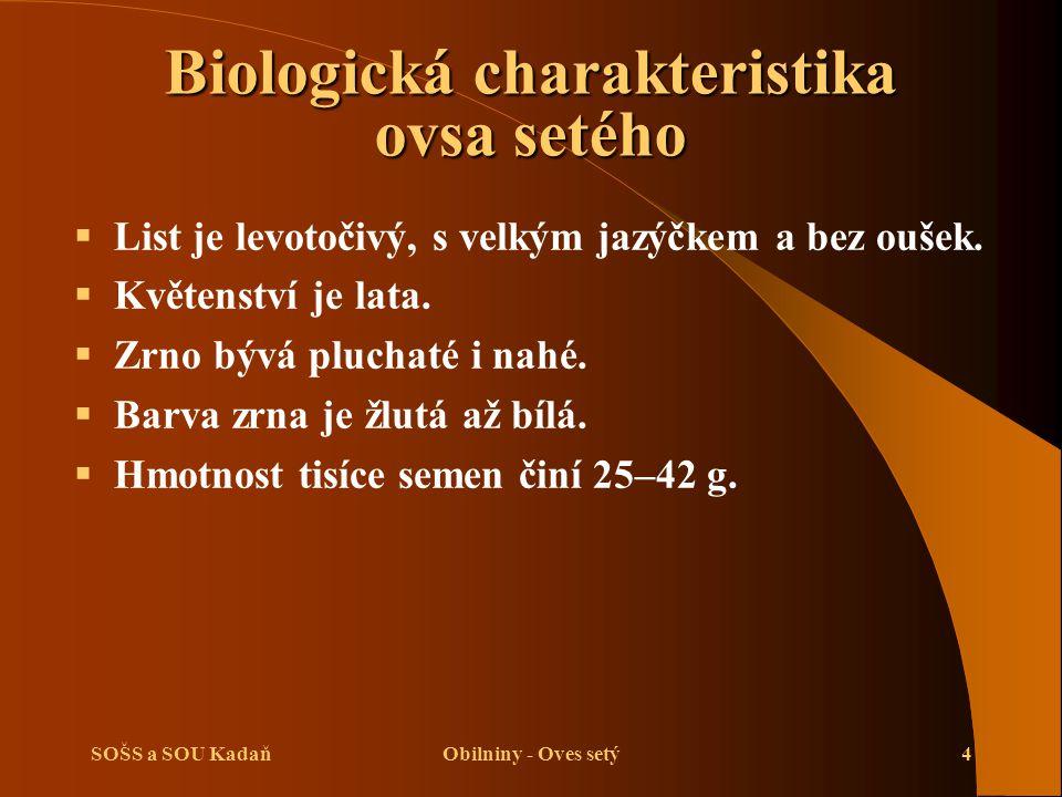SOŠS a SOU KadaňObilniny - Oves setý4  List je levotočivý, s velkým jazýčkem a bez oušek.  Květenství je lata.  Zrno bývá pluchaté i nahé.  Barva