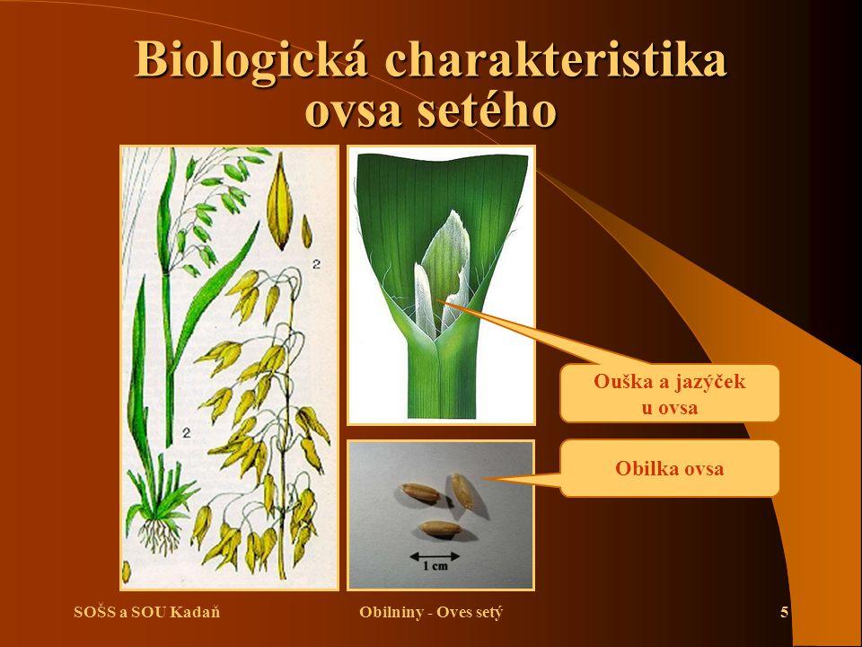 SOŠS a SOU KadaňObilniny - Oves setý16 Opakování  Stručně popište biologickou charakteristiku ovsa.