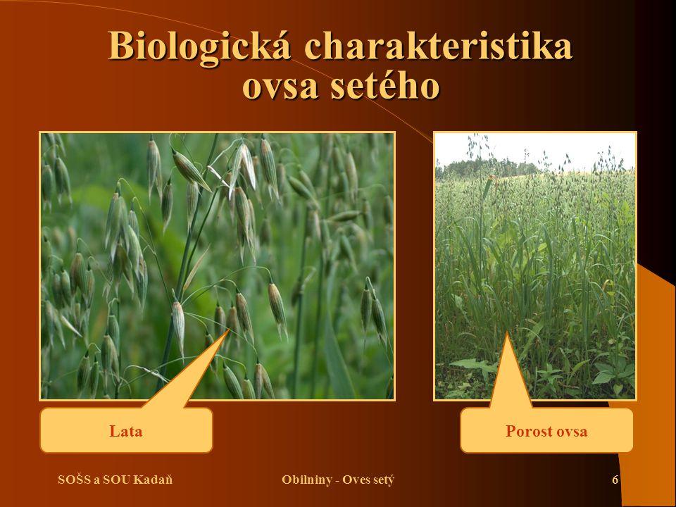 SOŠS a SOU KadaňObilniny - Oves setý6 Biologická charakteristika ovsa setého Porost ovsa Lata