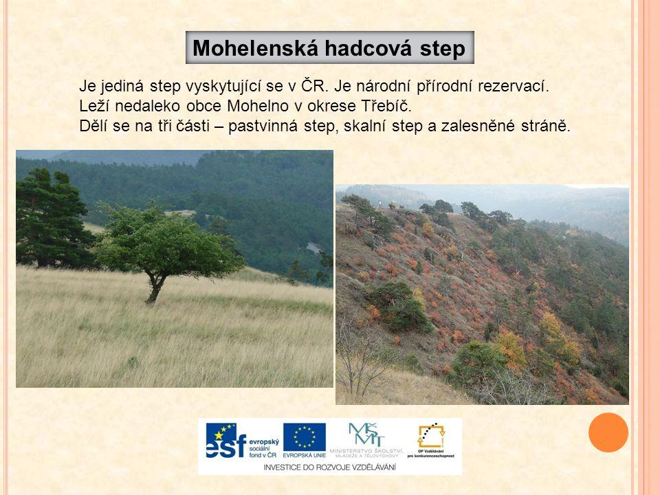 Je jediná step vyskytující se v ČR. Je národní přírodní rezervací. Leží nedaleko obce Mohelno v okrese Třebíč. Dělí se na tři části – pastvinná step,