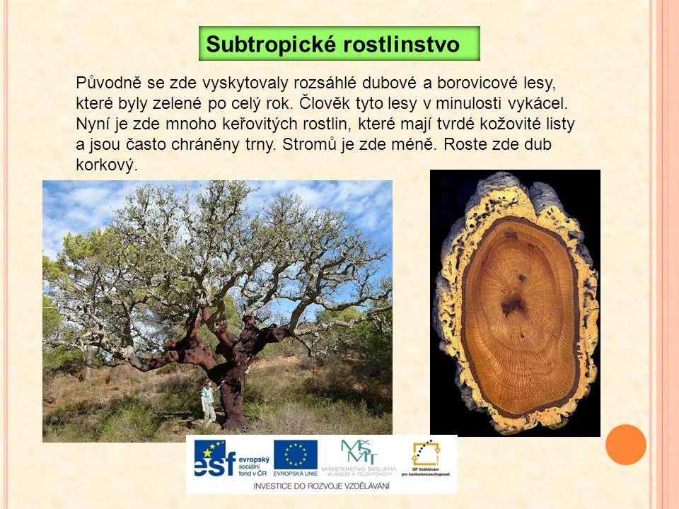 Původně se zde vyskytovaly rozsáhlé dubové a borovicové lesy, které byly zelené po celý rok. Člověk tyto lesy v minulosti vykácel. Nyní je zde mnoho k
