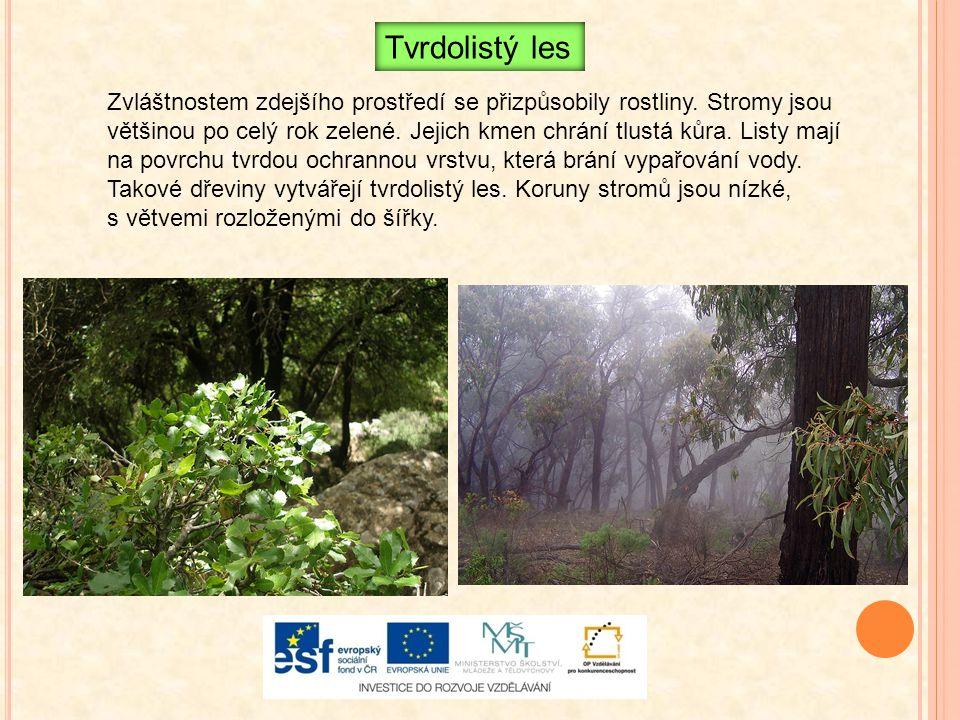 Zvláštnostem zdejšího prostředí se přizpůsobily rostliny. Stromy jsou většinou po celý rok zelené. Jejich kmen chrání tlustá kůra. Listy mají na povrc