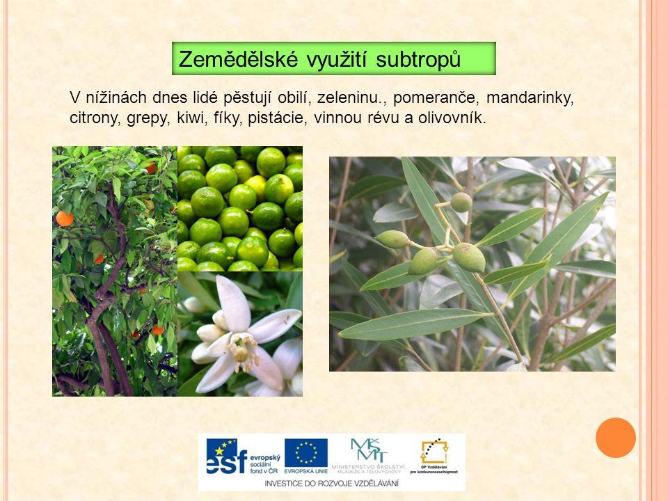 Zemědělské využití subtropů V nížinách dnes lidé pěstují obilí, zeleninu., pomeranče, mandarinky, citrony, grepy, kiwi, fíky, pistácie, vinnou révu a