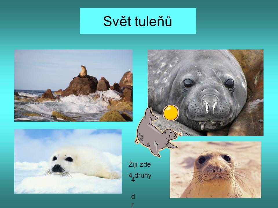 Svět tuleňů 4 druhy4 druhy 4 druhy Žijí zde