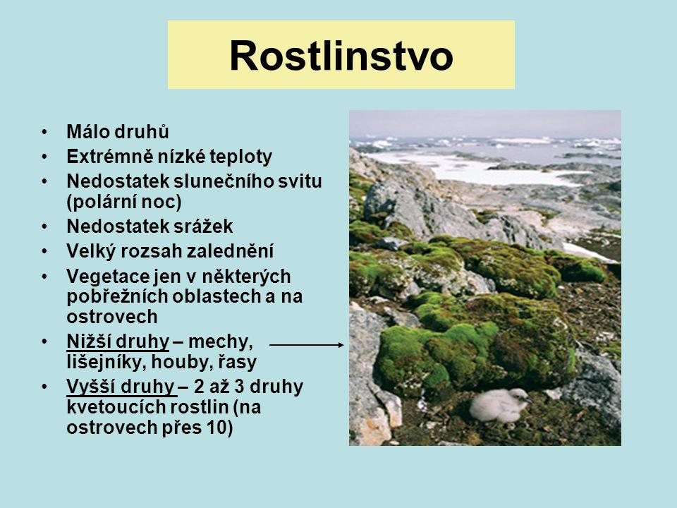 Rostlinstvo Málo druhů Extrémně nízké teploty Nedostatek slunečního svitu (polární noc) Nedostatek srážek Velký rozsah zalednění Vegetace jen v někter