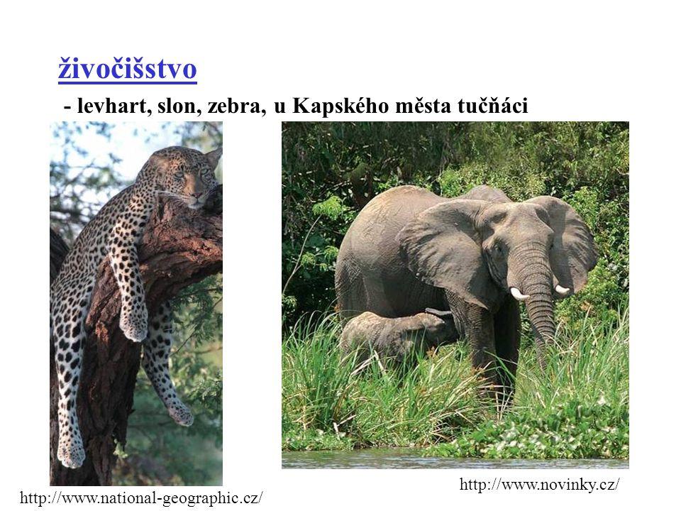 živočišstvo - levhart, slon, zebra, u Kapského města tučňáci http://www.national-geographic.cz/ http://www.novinky.cz/