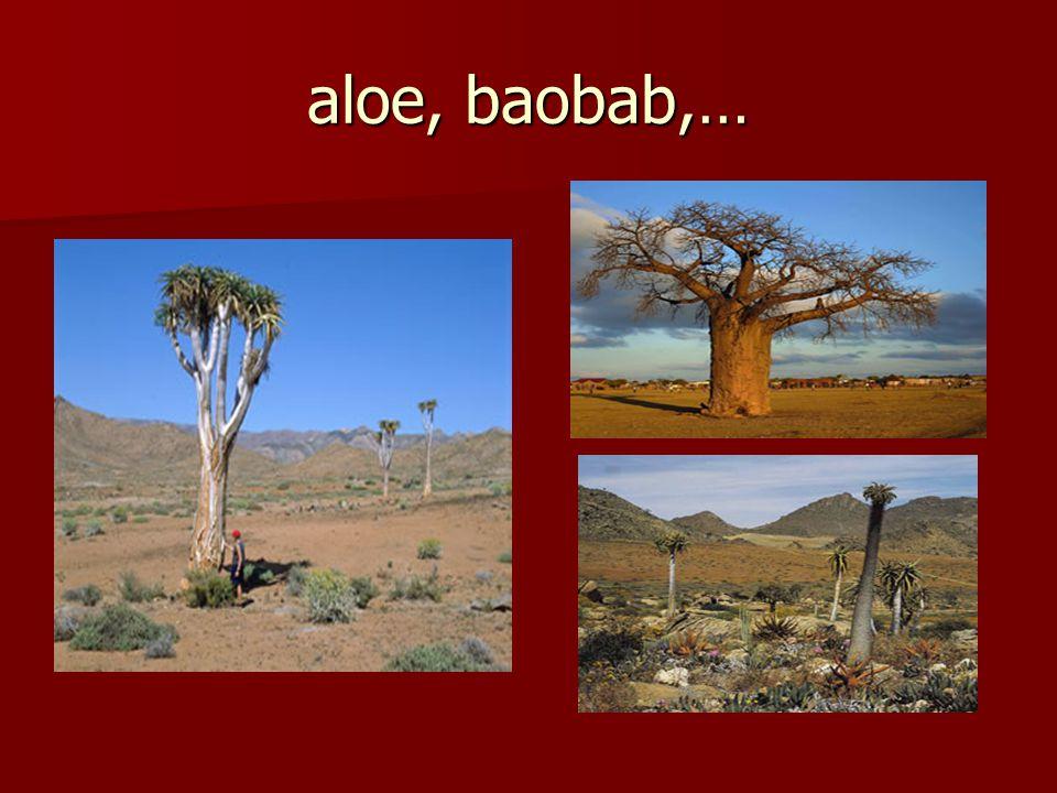 aloe, baobab,…