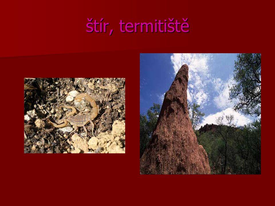 štír, termitiště
