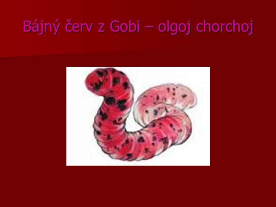 Bájný červ z Gobi – olgoj chorchoj