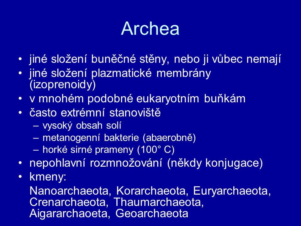 Archea jiné složení buněčné stěny, nebo ji vůbec nemají jiné složení plazmatické membrány (izoprenoidy) v mnohém podobné eukaryotním buňkám často extrémní stanoviště –vysoký obsah solí –metanogenní bakterie (abaerobně) –horké sirné prameny (100° C) nepohlavní rozmnožování (někdy konjugace) kmeny: Nanoarchaeota, Korarchaeota, Euryarchaeota, Crenarchaeota, Thaumarchaeota, Aigararchaoeta, Geoarchaeota