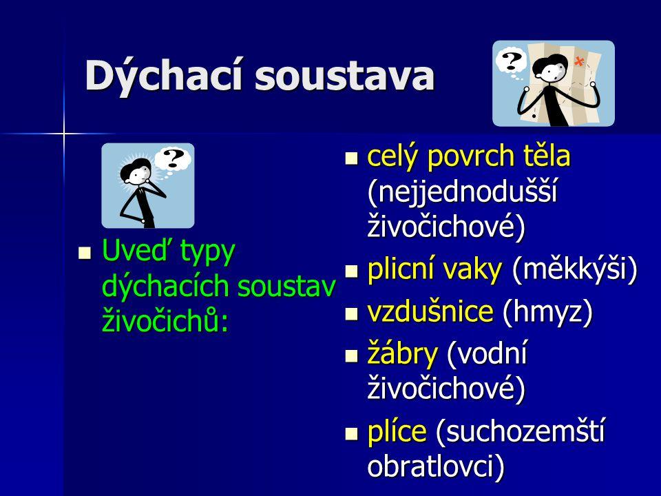 Dýchací soustava Uveď typy dýchacích soustav živočichů: Uveď typy dýchacích soustav živočichů: celý povrch těla (nejjednodušší živočichové) celý povrch těla (nejjednodušší živočichové) plicní vaky (měkkýši) plicní vaky (měkkýši) vzdušnice (hmyz) vzdušnice (hmyz) žábry (vodní živočichové) žábry (vodní živočichové) plíce (suchozemští obratlovci) plíce (suchozemští obratlovci)