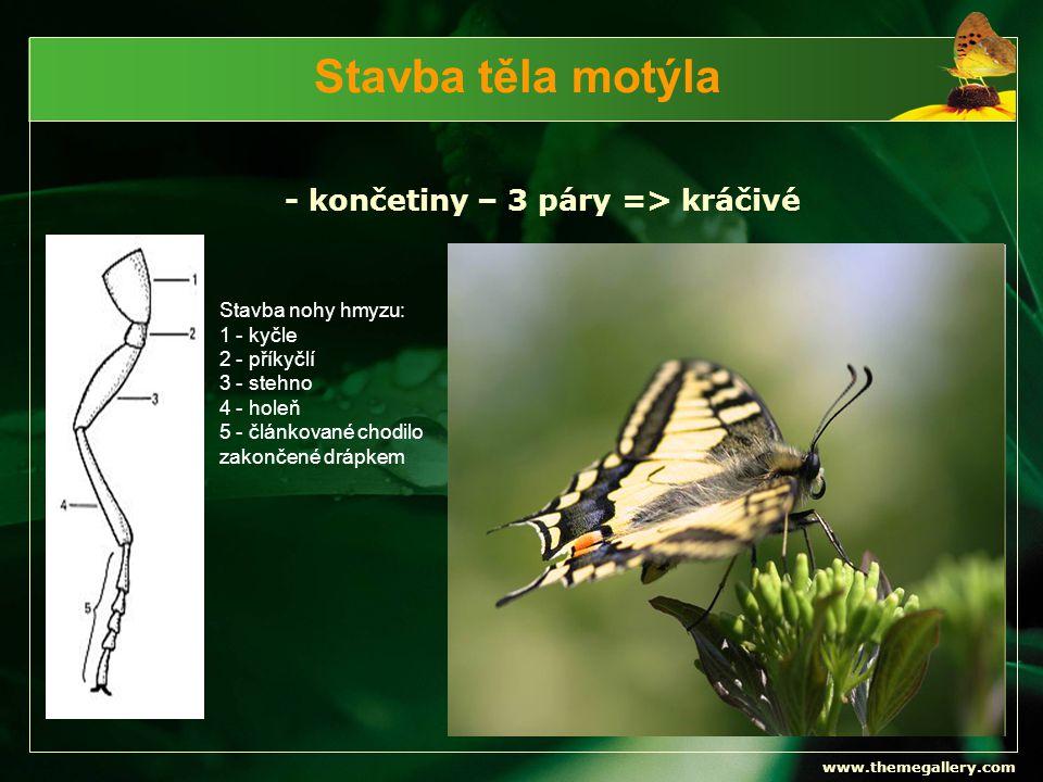 www.themegallery.com Stavba těla motýla - končetiny – 3 páry => kráčivé Stavba nohy hmyzu: 1 - kyčle 2 - příkyčlí 3 - stehno 4 - holeň 5 - článkované