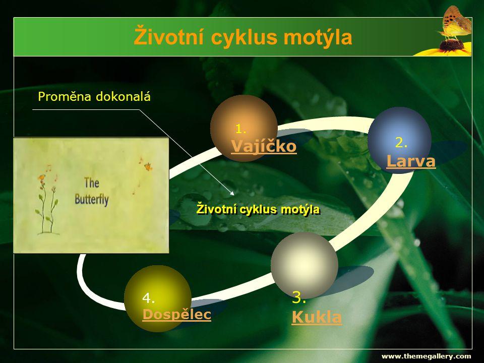 www.themegallery.com Životní cyklus motýla Text 1. Vajíčko 2. Larva 3. Kukla 4. Dospělec Životní cyklus motýla Proměna dokonalá