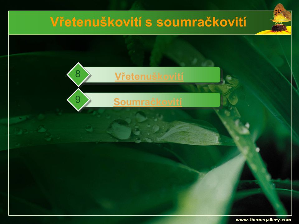 www.themegallery.com Vřetenuškovití s soumračkovití Vřetenuškovití 8 Soumračkovití 9