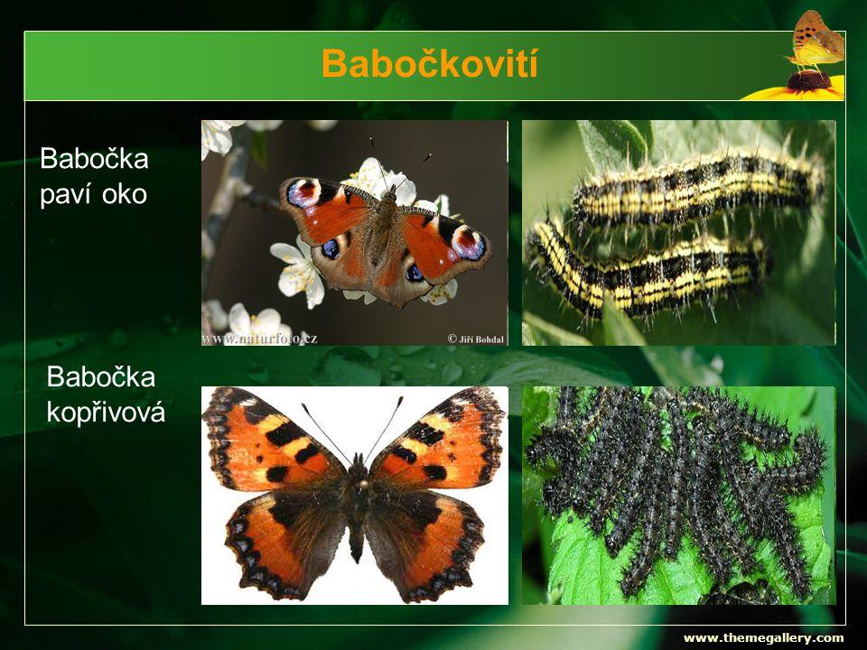 www.themegallery.com Babočkovití Babočka paví oko Babočka kopřivová