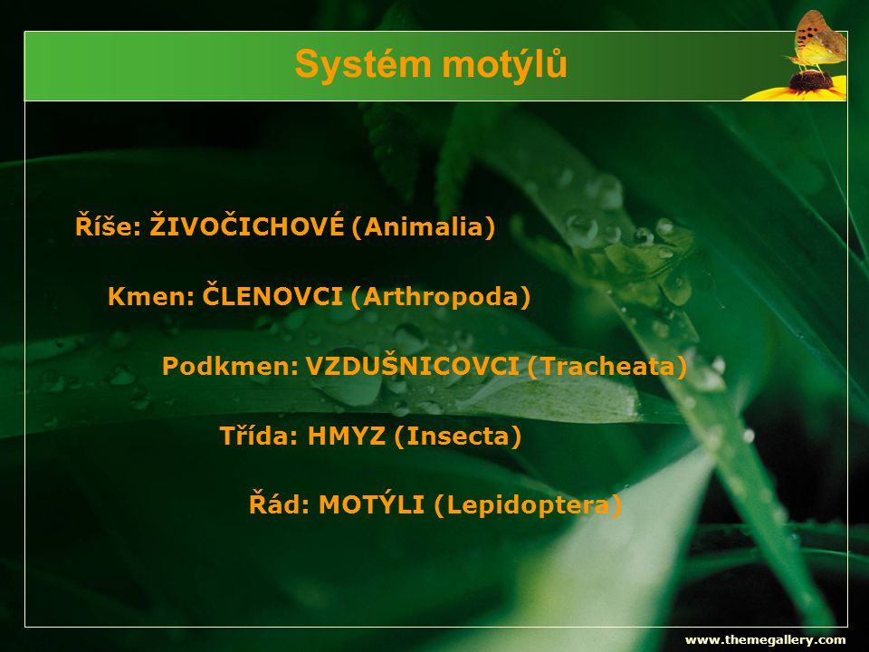 www.themegallery.com Systém motýlů Říše: ŽIVOČICHOVÉ (Animalia) Kmen: ČLENOVCI (Arthropoda) Podkmen: VZDUŠNICOVCI (Tracheata) Třída: HMYZ (Insecta) Řá