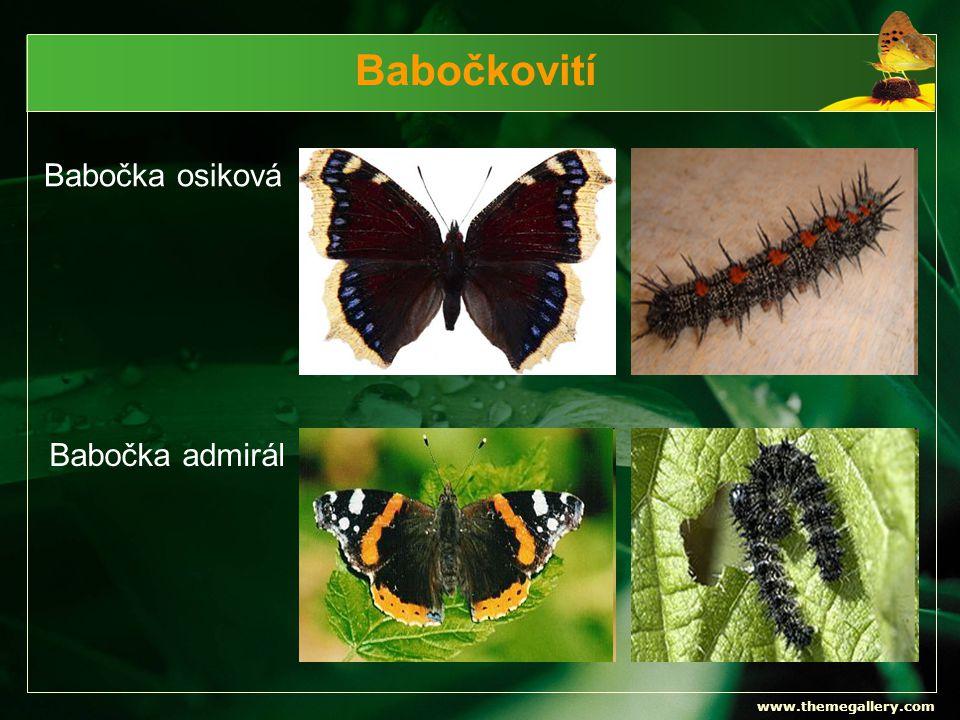 www.themegallery.com Babočkovití Babočka osiková Babočka admirál