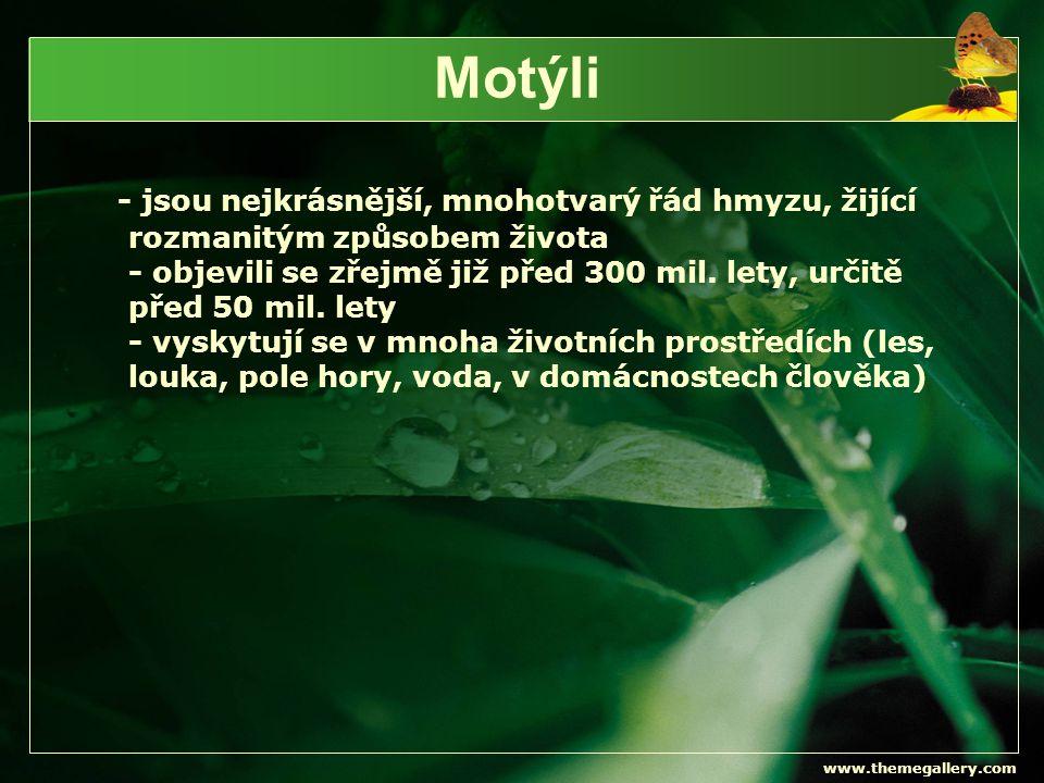 www.themegallery.com Zdroj  http://www.ekolide.cz/view.php?nazevclanku=motyli-1- vyznam-motylu-v-nasi-prirode&cisloclanku=2010020004 video motýl http://www.ekolide.cz/view.php?nazevclanku=motyli-1- vyznam-motylu-v-nasi-prirode&cisloclanku=2010020004  http://www.hmyz.net/anatomie.htm  http://translate.google.cz/translate?hl=cs&langpair=en|cs&u= http://exhibits.pacsci.org/insects/buttermoth.html http://translate.google.cz/translate?hl=cs&langpair=en|cs&u= http://exhibits.pacsci.org/insects/buttermoth.html  http://butterfly.webz.cz/babzar.html http://butterfly.webz.cz/babzar.html  http://zajimavosti546.blog.cz/1002/babocka-pavi-oko http://zajimavosti546.blog.cz/1002/babocka-pavi-oko  http://www.priroda.cz/detail_foto.php?id1=935&id2=966 http://www.priroda.cz/detail_foto.php?id1=935&id2=966  http://www.lepidoptera.pl/show.php?ID=158&country=XX http://www.lepidoptera.pl/show.php?ID=158&country=XX  http://www.jaknahmyz.cz/svab http://www.jaknahmyz.cz/svab  http://cs.wikipedia.org/wiki/Mot%C3%BDli http://cs.wikipedia.org/wiki/Mot%C3%BDli  http://www.5zsfm.cz/machacovi/priraz/7/motyli.html http://www.5zsfm.cz/machacovi/priraz/7/motyli.html  http://www.bombaza.cz/zahadny-motyli-druh/262 http://www.bombaza.cz/zahadny-motyli-druh/262  http://www.rodina-finance.cz/zajimavosti.209/ze-zivota- motylu.20661.html