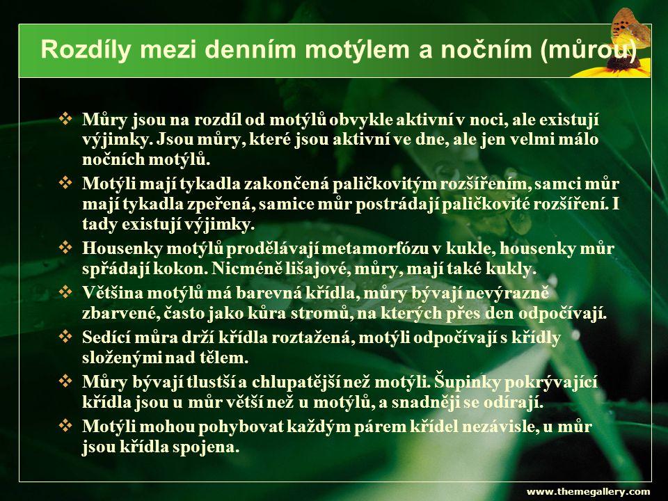 www.themegallery.com Běláskovití Bělásek zelný samecsamička Bělásek řepkový Bělásek řepový