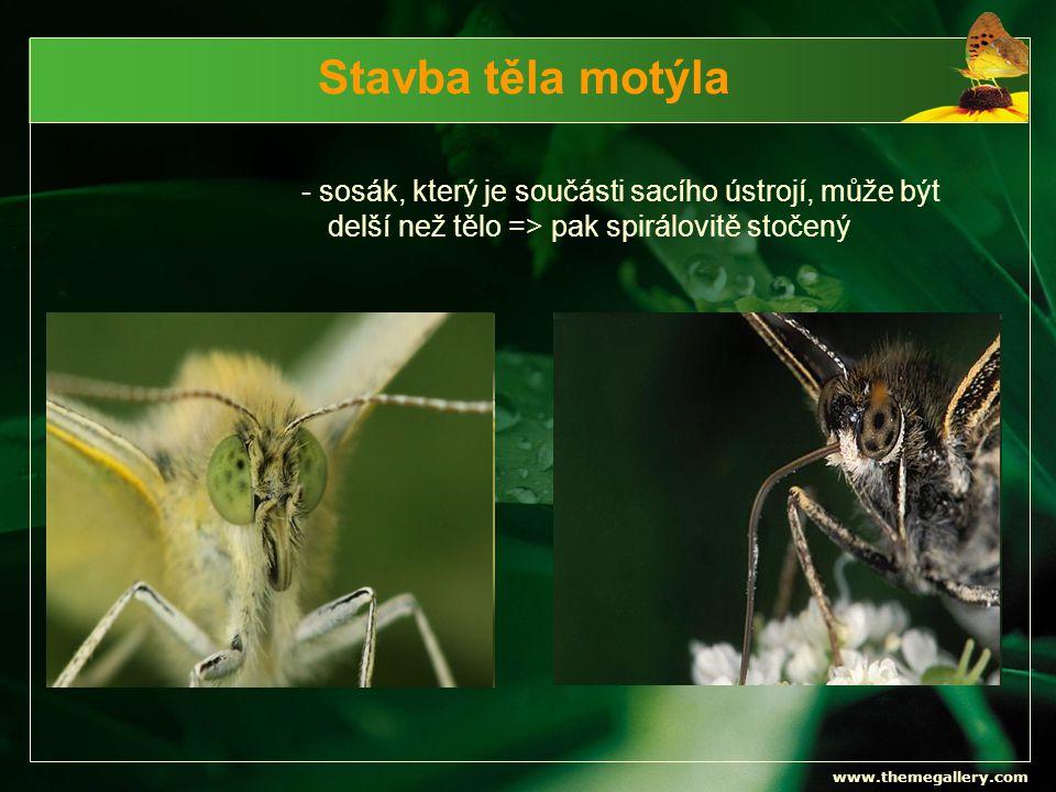 www.themegallery.com Hnědásci Hnědásek diviznový Hnědásek jitrocelový Hnědásek kostkovaný