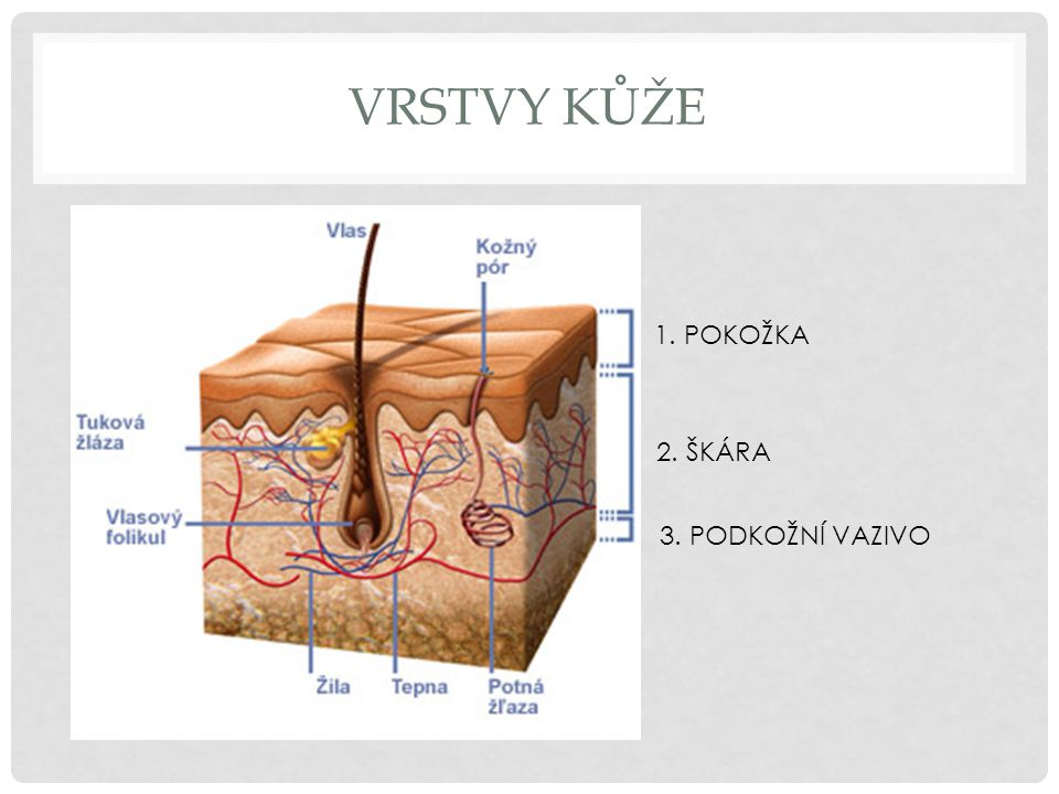 PORANĚNÍ KŮŽE Poraněním kůže si můžeme způsobit úraz (neobratným zacházením s ostrými předměty, pádem, neopatrným zacházením s elektrickými spotřebiči) Dojde-li k němu, je velmi důležité poskytnutí první pomoci.