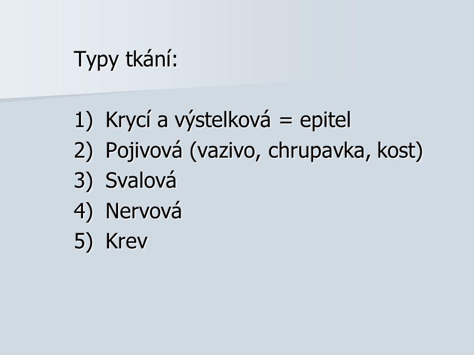 Typy tkání: 1)Krycí a výstelková = epitel 2)Pojivová (vazivo, chrupavka, kost) 3)Svalová 4)Nervová 5)Krev